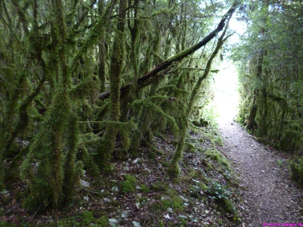 Rundum von Moos bewachsene Bäume